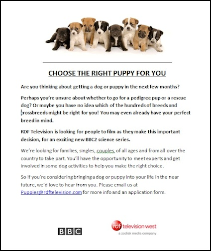 Puppies Flyer