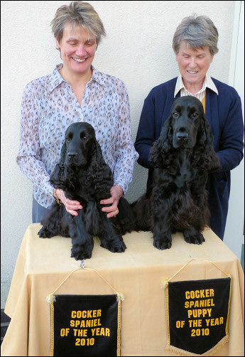 Cocker of The Year & Cocker Puppy of The Year 2010